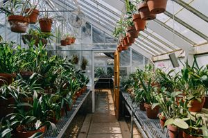 Greenhouse - Sean Tracy