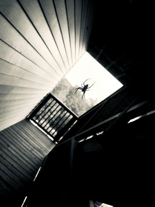Defy Gravity - E_bereswill