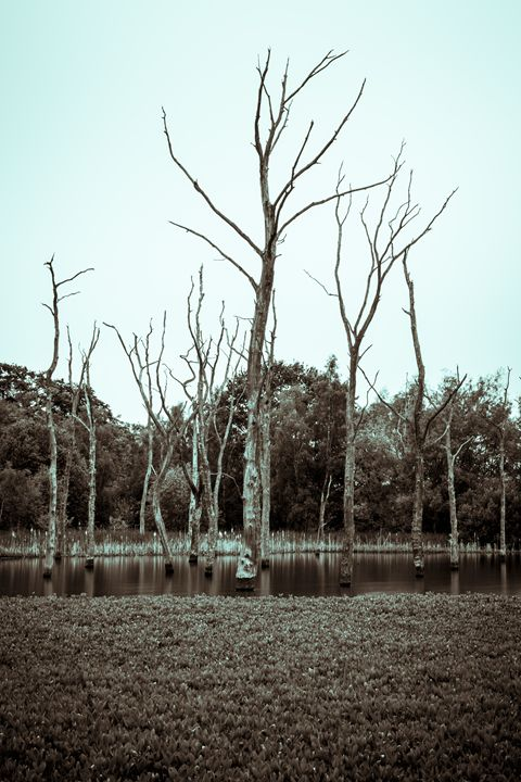 Dead Trees in Arcot Pond #1 - John Cox Photography and Fine Art