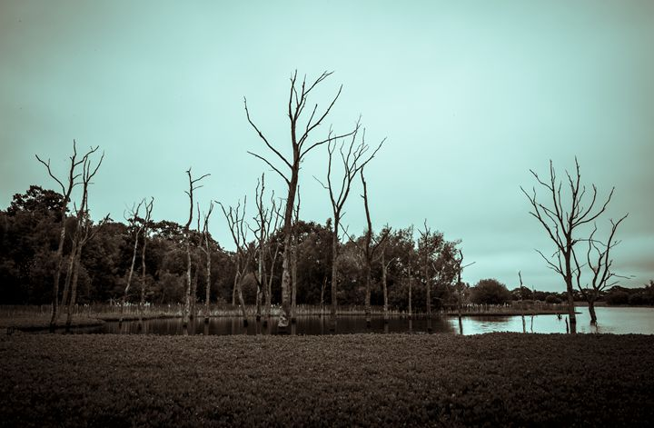 Dead Trees in Arcot Pond #2 - John Cox Photography and Fine Art