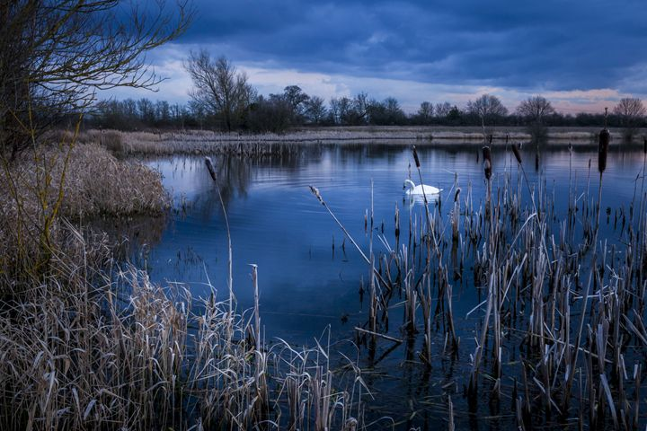 Swan on Arcot Pond. - John Cox Photography and Fine Art
