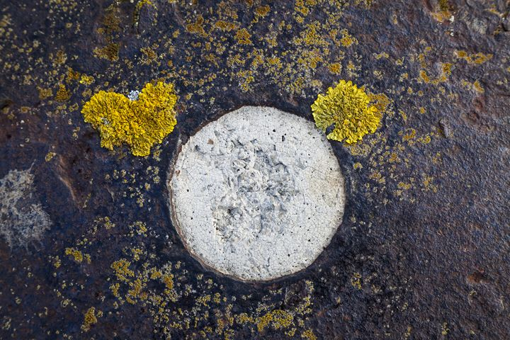 Lichen abstract. - John Cox Photography and Fine Art