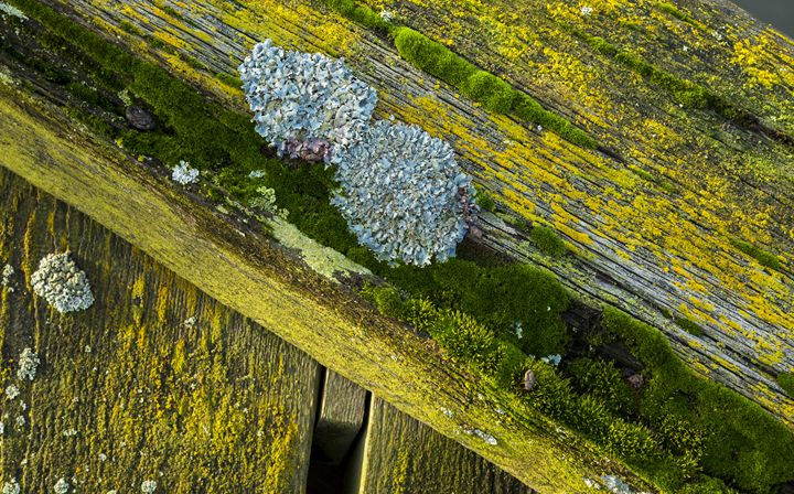 Colourful Lichen - John Cox Photography and Fine Art