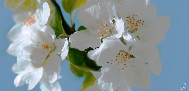 White Petals - Drawbyjai