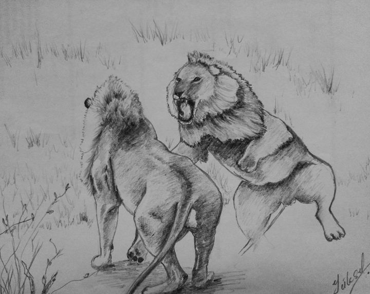 lions - my drawings
