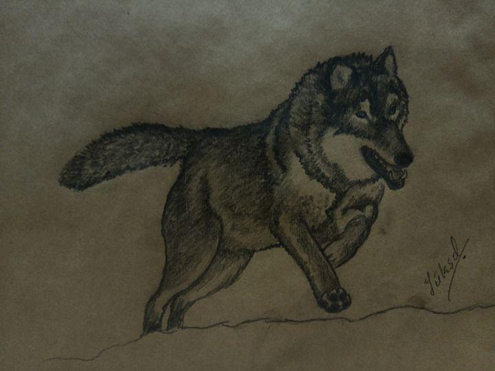 wolf - my drawings