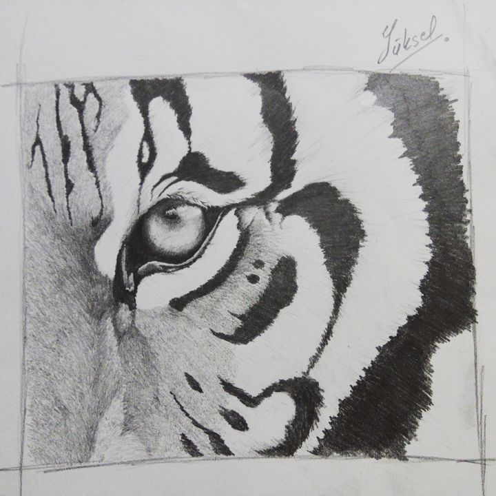 tiger - my drawings