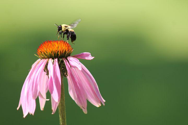 Bee Landing - The Farmers Wife Art