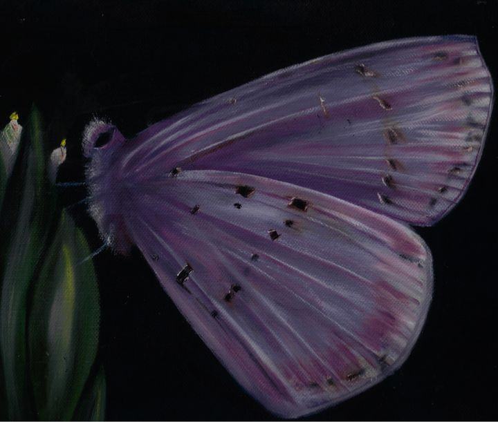 Butterfly - Amanda Bily and Collections