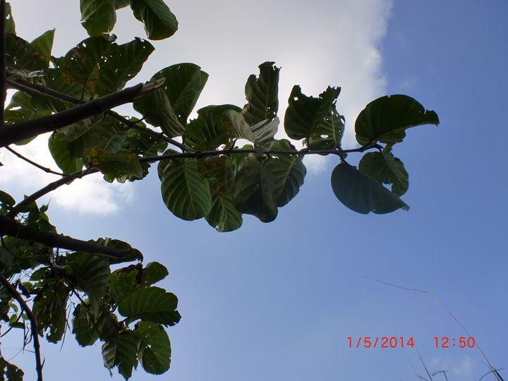 sunny leaves - detour625