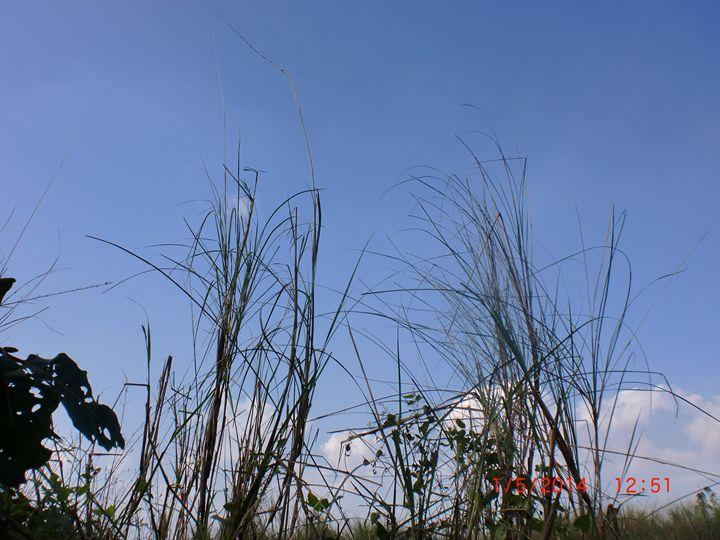 river grass - detour625