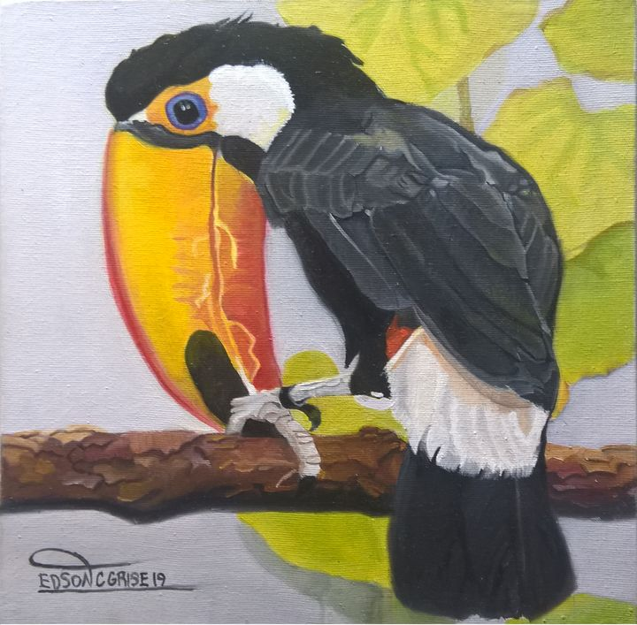TUCANO TOCO. - edsoncgrise
