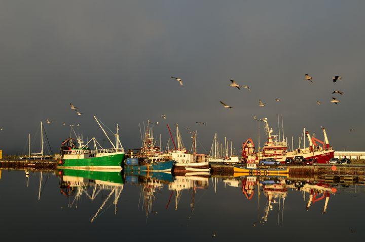 Dingle Harbor - Barbara Walsh Photography