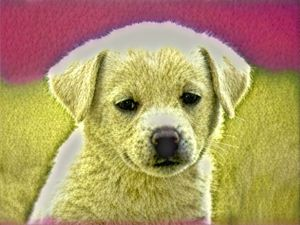 Puppy love - Christina Norfleet