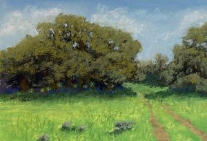 Texas Hill Country-Oak Trees in Spri