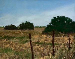 Pasture-Galveston Mid-winter #3