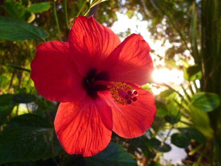 Hibiscus - Little art
