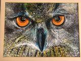 Original painting of an owl