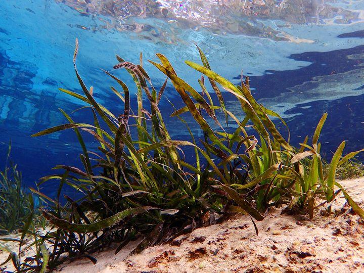 Juniper Grass - Joe Cruz Photography