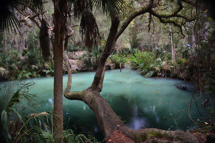 Mystery Green - Joe Cruz Photography