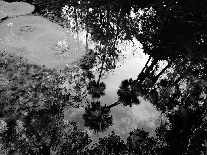 Silver Glen Reflections - Joe Cruz Photography