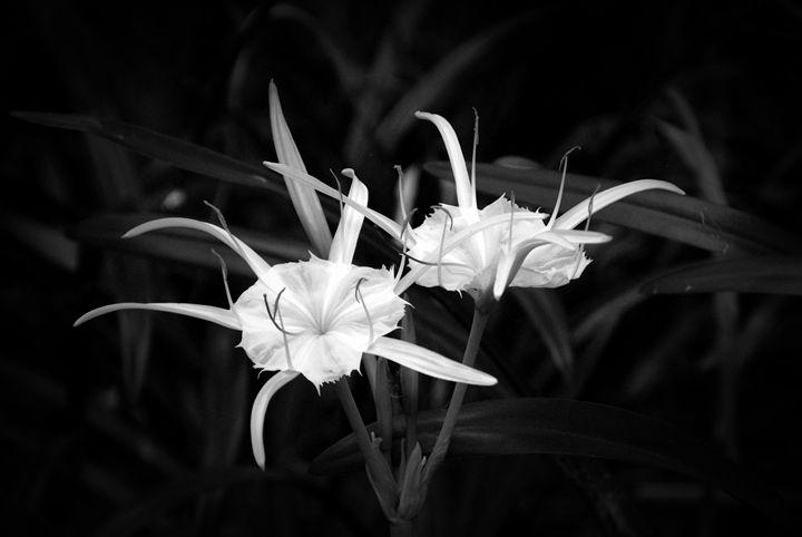 Silver Beauties - Joe Cruz Photography
