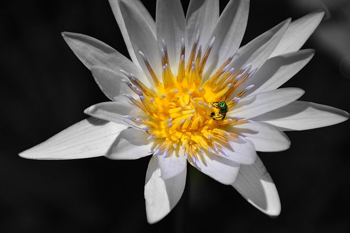 Stunning Beauty - Joe Cruz Photography