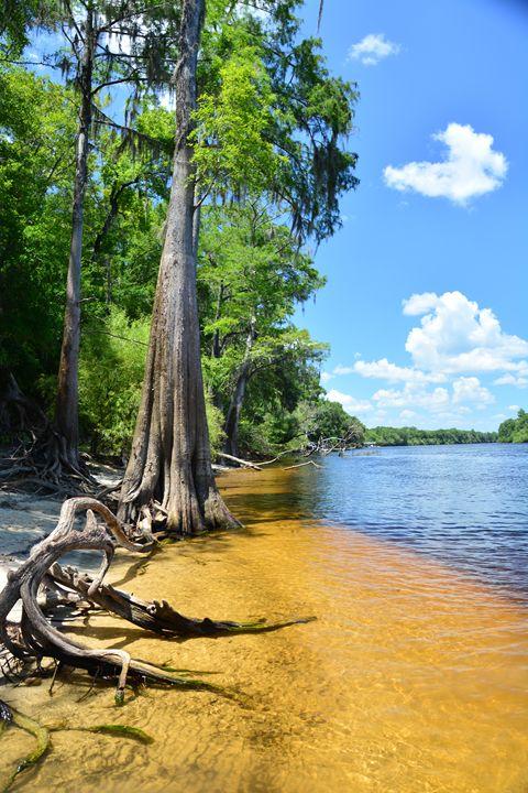 Suwannee River Dreams - Joe Cruz Photography