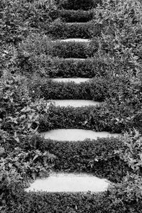 Stairs in the grass