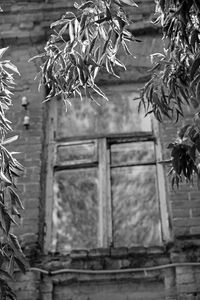 Window and leaves of an unknown tree