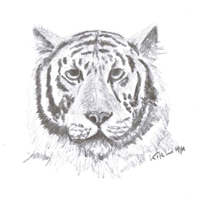 tiger - Printable Drawings