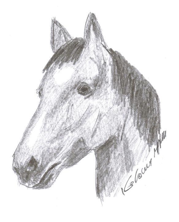 horse (graphite pencil on paper) - Printable Drawings