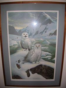 Arctic Glow Snowy Owls