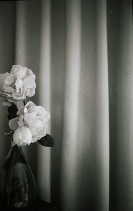 White rose flowers in vase - edwardolive