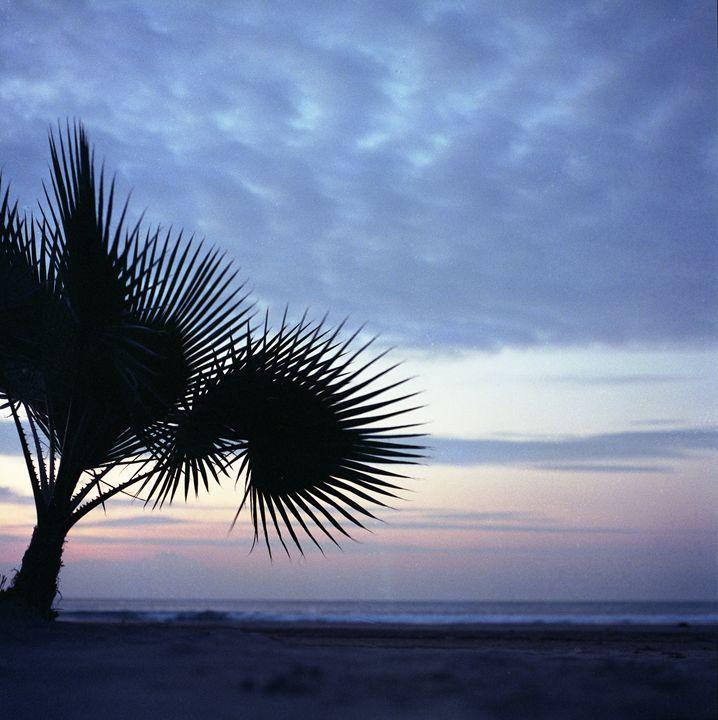 Tropical palm tree on beach Ibiza - edwardolive