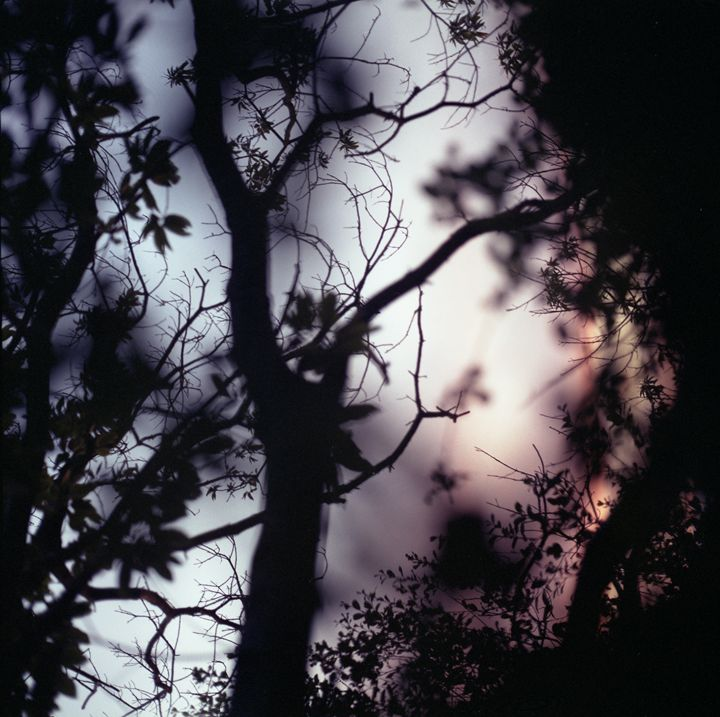 Tree branches on summer evening - edwardolive