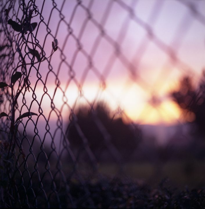 Wire fence and foliage in summer - edwardolive