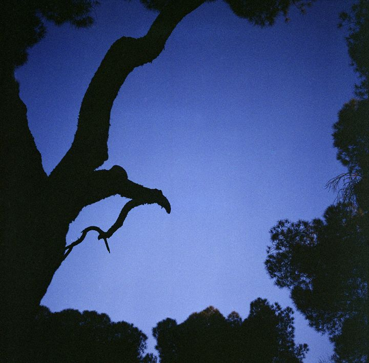 Tree branches in silhouette at dusk - edwardolive