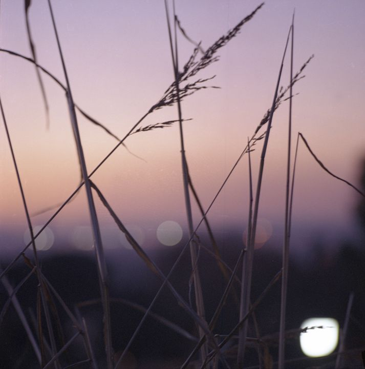 Long wild grass on summer evening - edwardolive