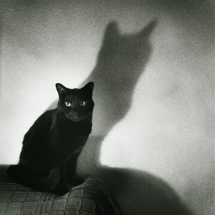 Portrait of black cat on sofa - edwardolive