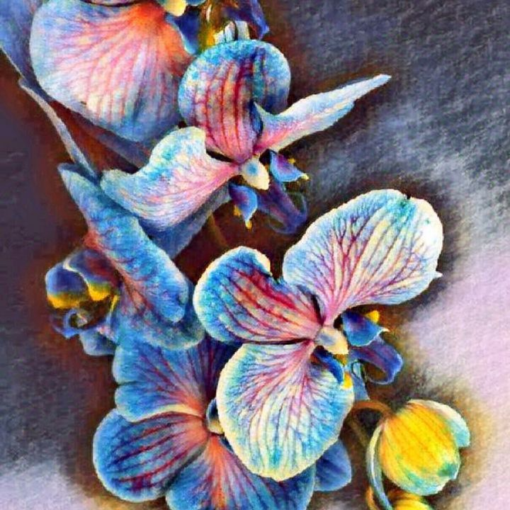 Orchid - Heena Patel