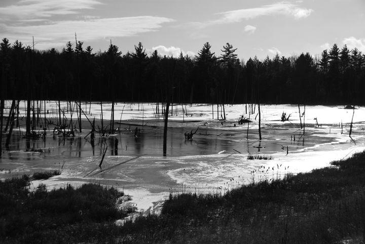 Frozen Bog - Adirondack Imaging