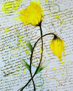 Yellow Rose Love Letter