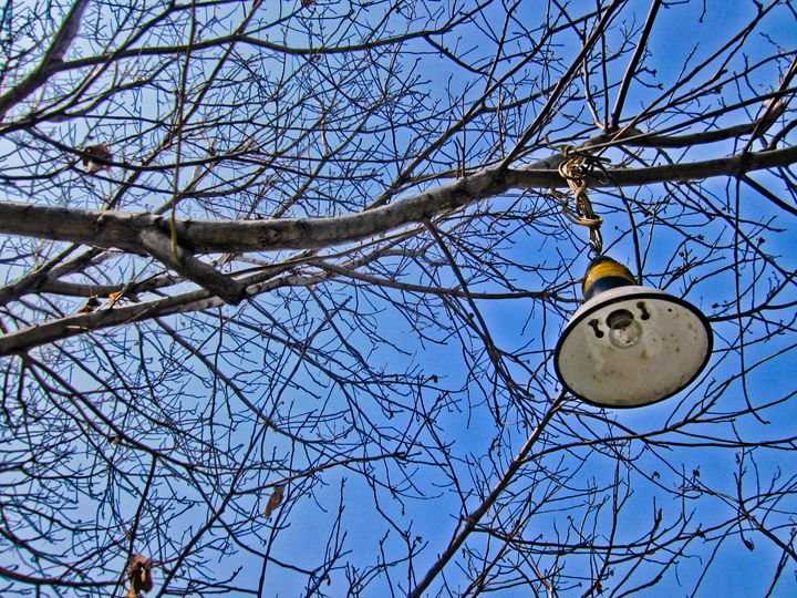 Tree Lamp - The Art Gallery of Kamil Suleyev