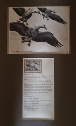 Federal Duck Stamp Prints $200