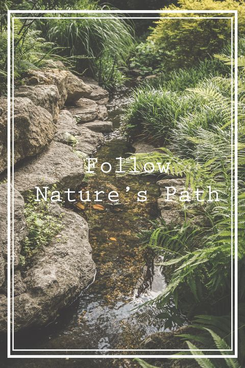 Follow Nature's Path - Luna Shine's Photography