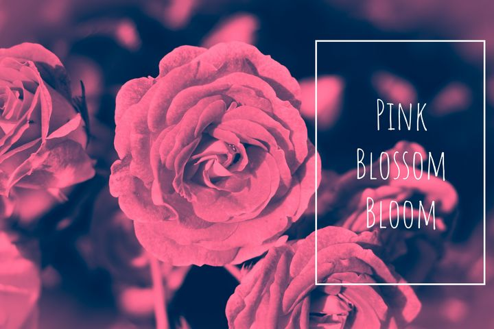 Pink Blossom Bloom - Luna Shine's Photography