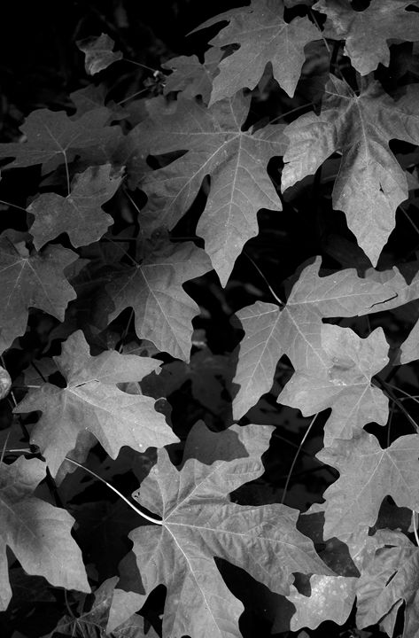 Leaves - Bill Love