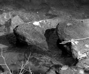 Moss Rock#2