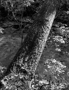 Moss Rock#4 - Bill Love